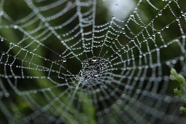 if you have a spider phobia then hypnotherapy could help you beat it