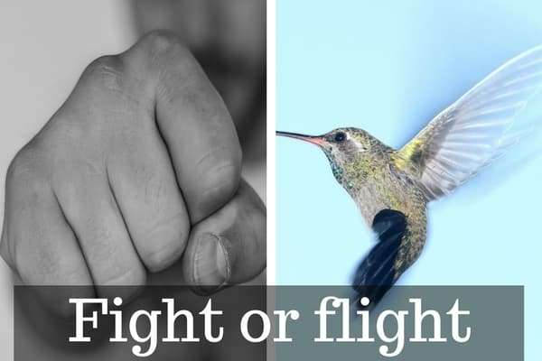 a fist representing fighting and a bird representing flight in response to anxiety