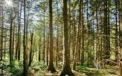 A wooded scene in Sheffield